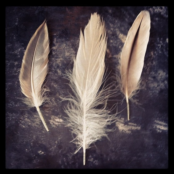 Feathers Props