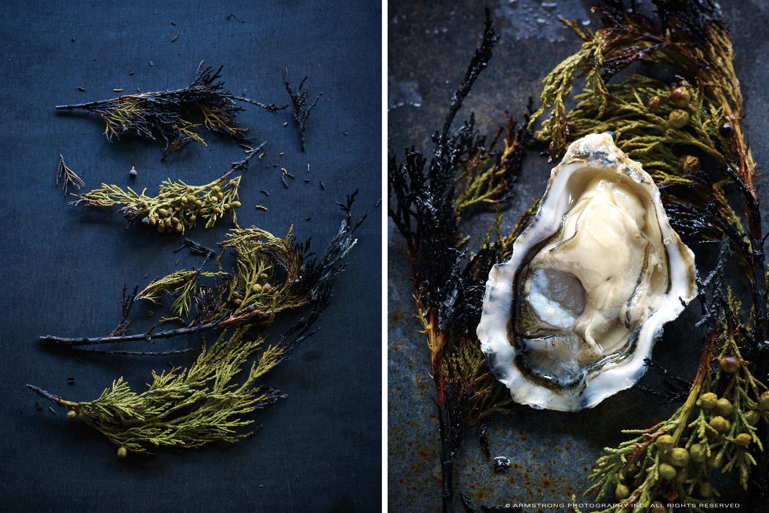 Pine-and-Oyster